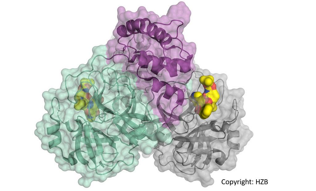 Darstellung des Corona-Viruses